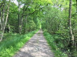 rak skogsväg genom grönskande natur